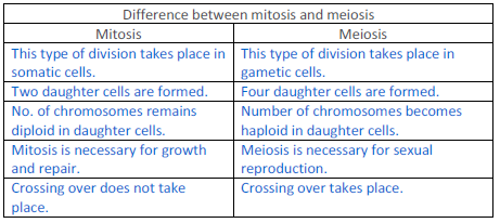 differences between meiosis and mitosis Mitosis vs meiosis the process of cell division serves to multiply cells it involves the distribution of identical genetic material, dna, to two daughter cells.